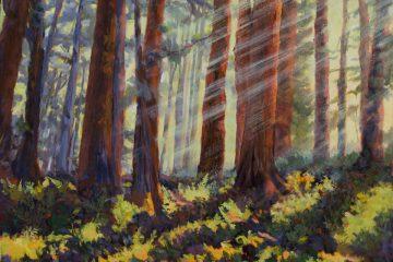 Redwood Mist, oil on canvas, 24x30