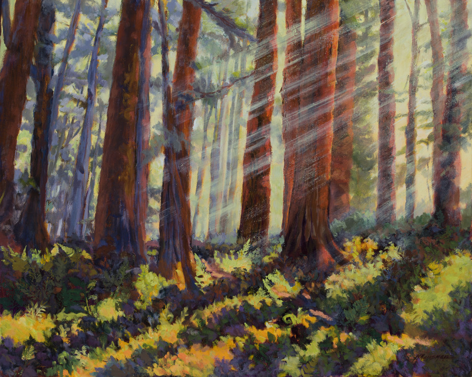 Redwood Mist, oil on canvas, 24x30
