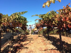 Michele plein air sketching in the vineyard