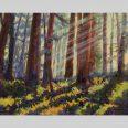 Redwood Mist 24x30