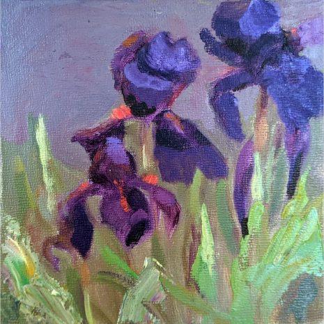 Lavender Iris 6x6
